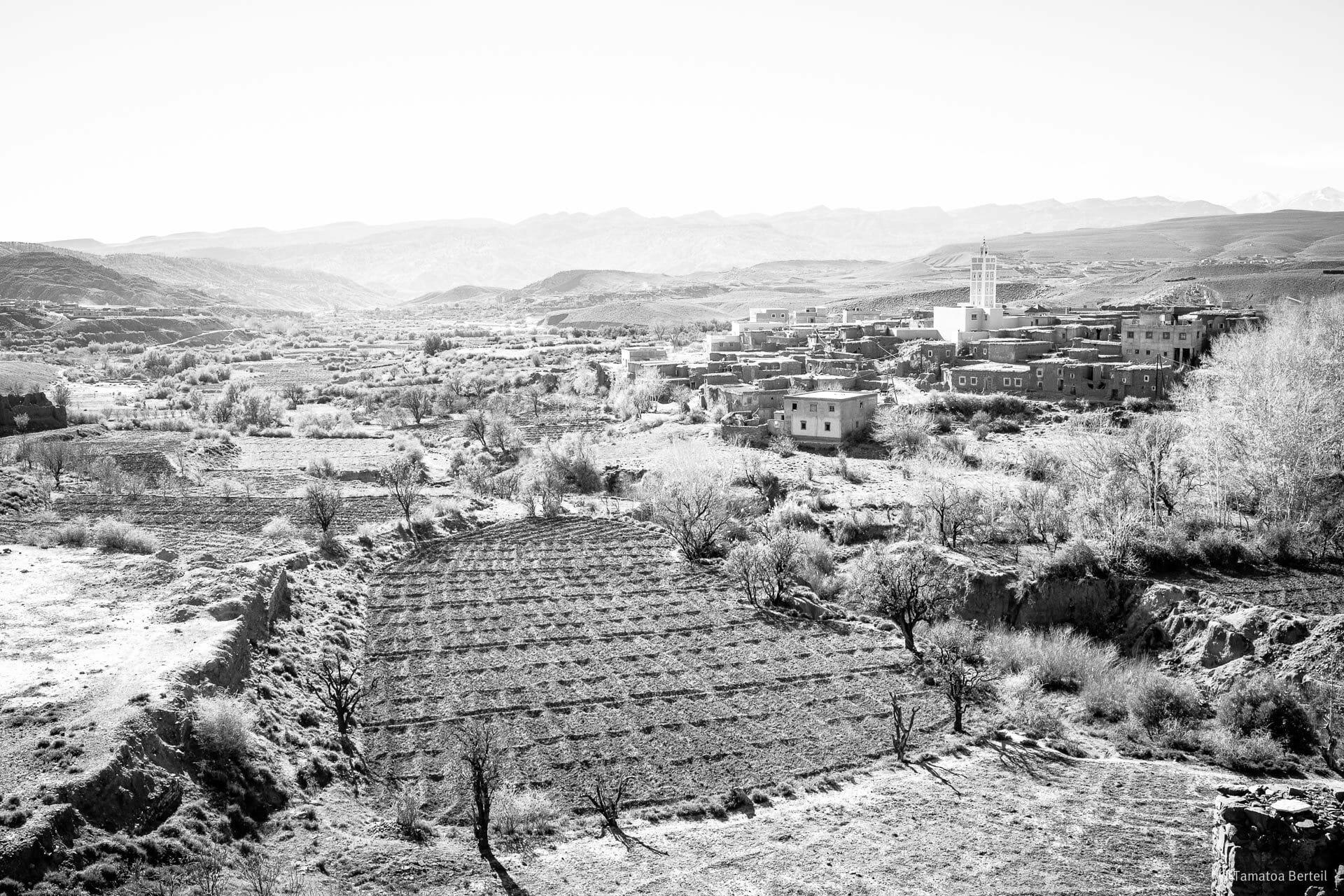 tamatoa-maroc-32
